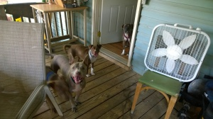 Max, Penny and Ida at the front (pasture side) door.
