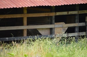 side of the barn/stable (will be a barn....)
