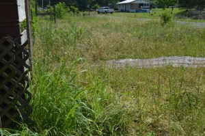 more weeds toward the neighbors house